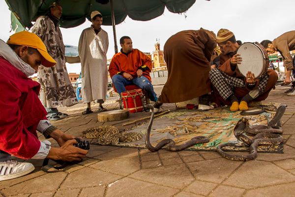 Snake Charmers Marrakesh