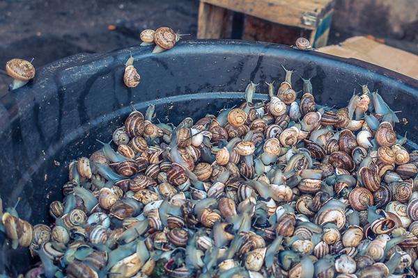 marrakesh food snails