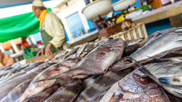 Close up of some fish ready to be sold at a market in Sidi Ifni, Morocco