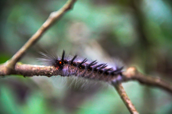 Plenty of creepy crawlies hide in the wilderness