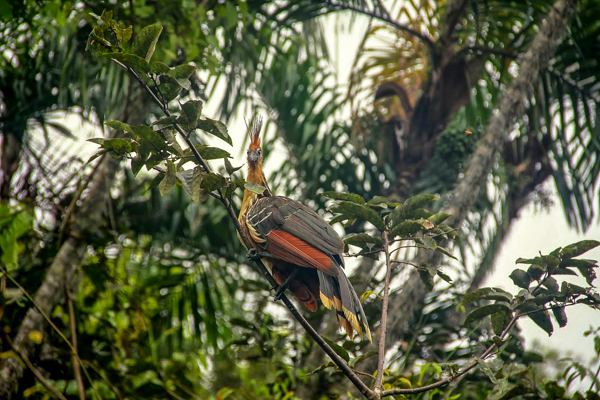 Exotic birds bring beautiful colors to the rainforest